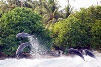 Passe Hiria de Tiputa - Rangiroa